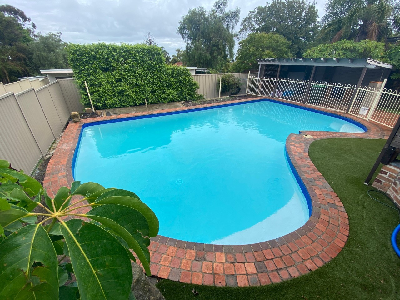 Pool renovation completion, blue water with a beautiful plant in the foreground.